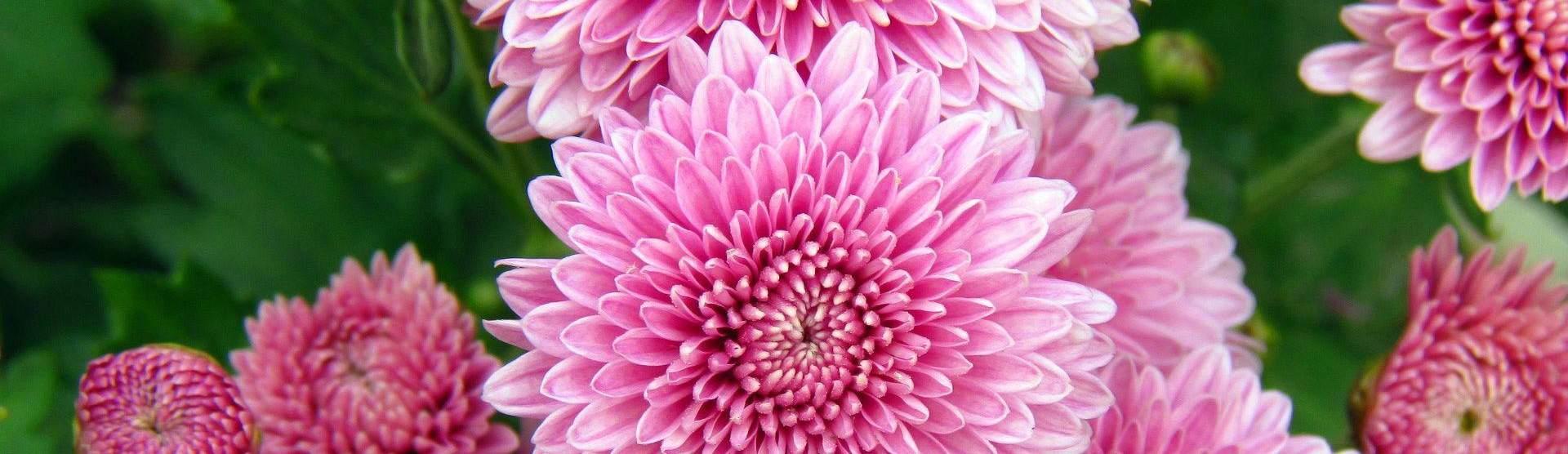 Выращиваем цветы для вас